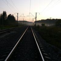 Вологодская область, Дикая, Ершовка