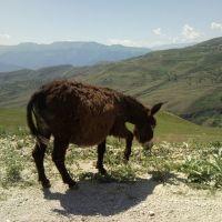 Горы кавказа., Мехельта