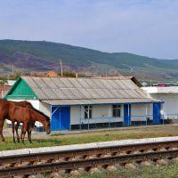 Недействующий остановочный пункт 173 км (Брагуны) в селе Дарбанхи, 21/08/2011, Терекли-Мектеб