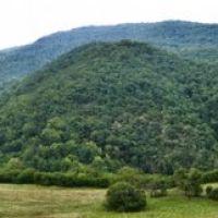 Вид на лес, Хив