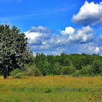 В летний день на лугу, Верхний Ландех