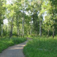 Дорога в парке, Заволжск