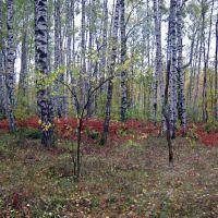Осенний лес, Иваньковский