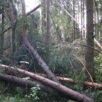 Ураган 18.07.2008, Кохма
