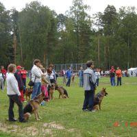 Кохма, стадион, собачьи состязания, Кохма