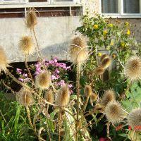 Кохма, странные цветы (2), Кохма