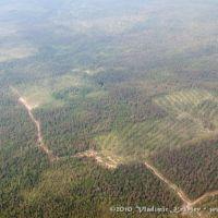 Вырубки леса, Чунский