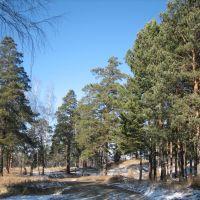 Сосны + первый снег. / Pine-trees + First Snow., Ангарск