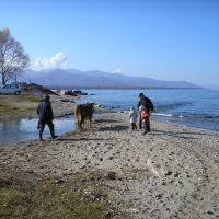 Baikal + Cow + Chamar-Daban / Байкал  + корова + Хамар-Дабан, Байкальск