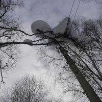 Снег на дереве. Байкальск, Байкальск