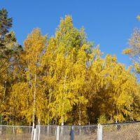 Золотая осень., Зима
