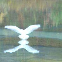 Птичка взлетает, Казачинское