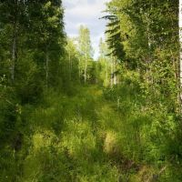 """Одно из лесных """"направлений"""", Квиток"""