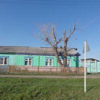 Покоцанное, в 2004 году, дерево., Кутулик