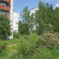 Жасмин на пр. Мира, Усть-Илимск