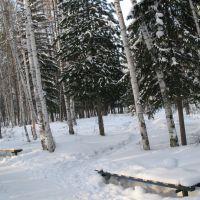 Березовая роща, Усть-Илимск