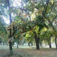 Центральный парк города, Нарткала