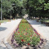 Аллея в парке., Прохладный