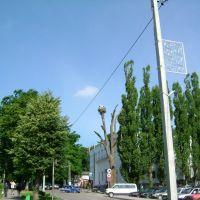 Гнездо аистов на ул.Ленина, Гурьевск