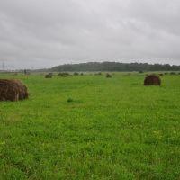 Аистово поле, Гурьевск