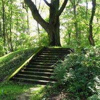 Покрытая мхом старая лестница, Калининград