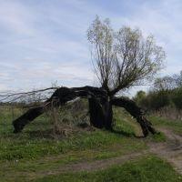 выгоревшее дерево, Мамоново