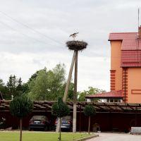Гнездо аистов, Мамоново