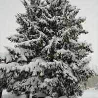 Елки зимой, Нестеров