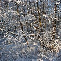 Winter patterns - Зимние узоры, Светлогорск