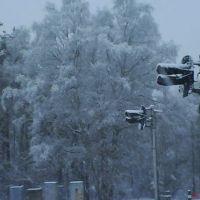 Переезд Балтийский лес, Светлый