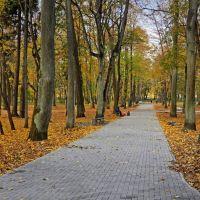 Поперечная аллея в городском парке в Советске., Советск