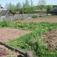 Весна, Березайка