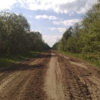 святинская дорога, Васильевский Мох