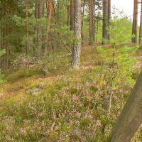 Сказочный лес, Жарковский