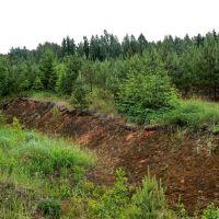 Молодой лес вдоль дороги, Жарковский