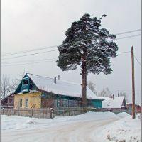 Жизнь под сосной в Западной Двине, Западная Двина