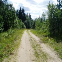 Дорога в лесу, Спирово