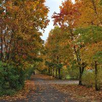 Осень. Аллея на улице Энтузиастов, Удомля