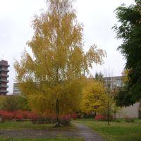 Осень в Удомле, Удомля