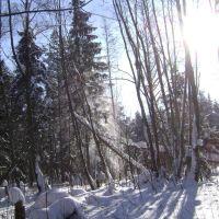 Зимний лес, Удомля