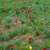 Kalmikias spring, Приютное