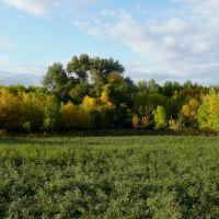 Осень, Юста
