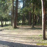 в лесу, Балабаново