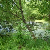 Утиный пруд, Бетлица