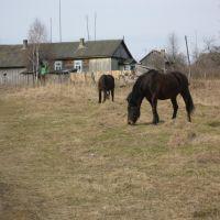 Horses, Дудоровский