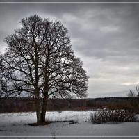 В окрестностях с. Боброво, Думиничи
