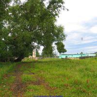 Старая ракита по дороге к ДК (12.06.2009), Еленский
