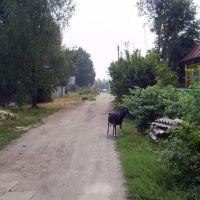 ул. Крупская  лето, Козельск