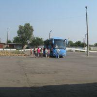 автобус, Козельск