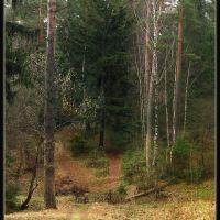 С горки в лес, Кондрово
